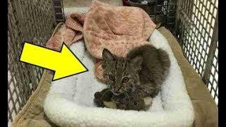 رجل إنقاذ هذه القطة الصغيرة ولكن بعد ذلك أكتشف أنها ليست قطة عادية