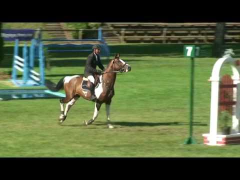 ♥ Romano de la Roque- jumping horse  by Limbo