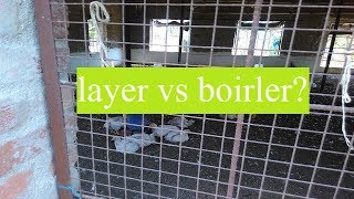 layer vs boirler farming | best business idea in hindi |