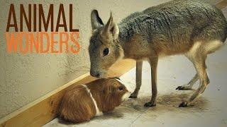 Interspecies Relationships