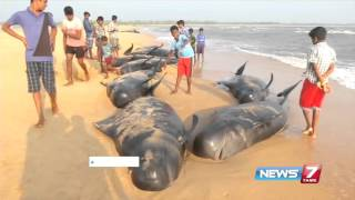 Ilangovan, Marine Researcher explains the reasons for whale death | News7 Tamil