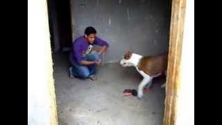 تدريب كلاب  ( dog training .....sign language   ) بالإشاره .