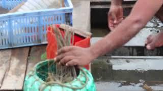 fish hounting || bangladesh natural fish catching