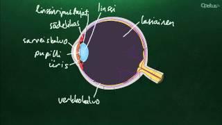 Silmä ja näköaisti (yläkoulu)