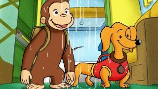 Curious George 🐵Camping with Hundley 🐵Full Episode 🐵 HD 🐵 Cartoons For Children
