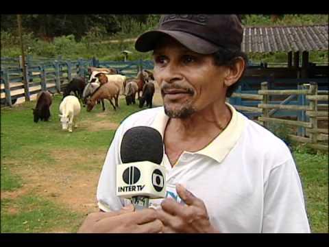 Haras D lucas interior de Minas reportagem da Intertv dos vales