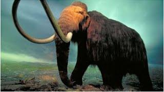 Endangered Species Animal Species    Top 10 Endangered Species