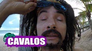 MUSTAFARY (MARCO LUQUE) -- CAVALOS
