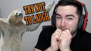 TRY NOT TO LAUGH - Animal Fails