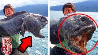 5 Creature Marine Misteriose Ritrovate Durante Una Pesca
