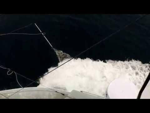 Harpooning Monster swordfish in the Emerald Basin