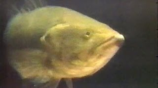 Old TV Commercials - Fishing Shows 1986