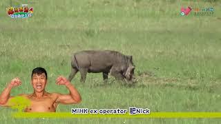 屌出香港4_EP16 - 馬塞馬拉大自然保護區私人吉普車Safari/ 鱷魚和河馬可以和睦相處?/ 遇上群獅獵食動物/ 動物界支那人hyena鬣狗執死雞/ 同場加映:導遊在草原上人有三急 - a