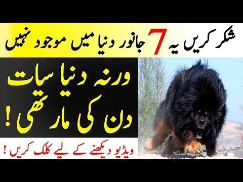 Xxx Mp4 7 Deadliest Animals From Past Mazi Kay 7 Khatarnak Janwar Islamic Solution 3gp Sex