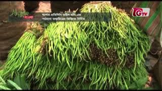 যশোরে সবজি চাষে কীটনাশক   সবুজ বাংলা । Sobuj Bangla