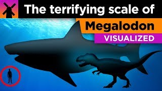 The Terrifying True Scale Of Megalodon Visualized