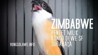 Pentet Zimbabwe Gacor Calon Juara Piala Presiden Download Mp3 Mp4 3GP HD Video