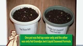 Gardening Tips-Liquid Seaweed Fertilizer Test