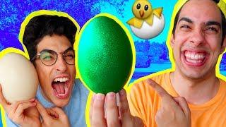 اغرب بيض ممكن تشوفوا في العالم | بيضة خضرة!!!