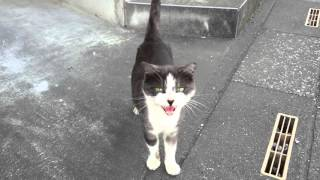 My new friend the talking cat! Speaking Kitty.