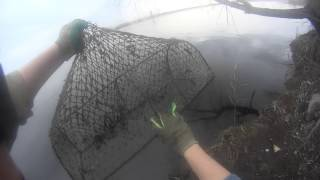 Волокуша для ловли раков своими руками