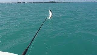 Florida Tarpon Fishing Trip