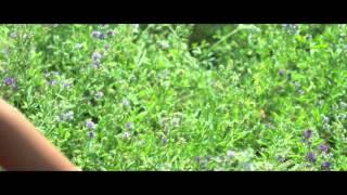 Sairat| Halad pivali por kavali song
