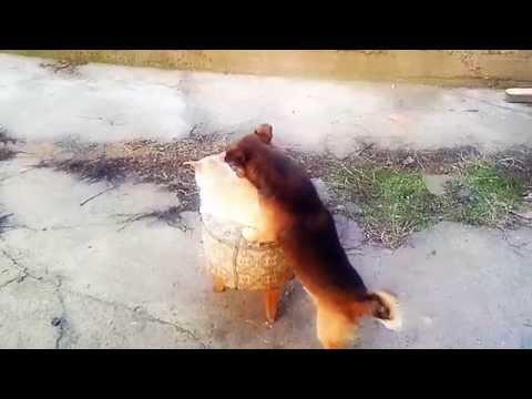Xxx Mp4 DOG XXx Cat 3gp Sex