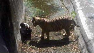 White tiger kills man who fell into its enclosure at Delhi zoo