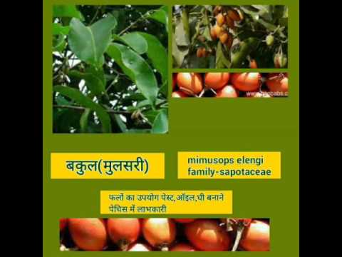 Best presentation Indian jadi buti by mayuri