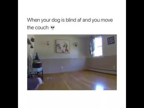 Xxx Mp4 When Your Dog Is Blind And You Move The Couch 3gp Sex