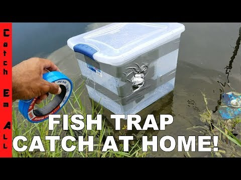 Xxx Mp4 FISH TRAP BIN Homemade DIY Fish Trap Catches Fish 3gp Sex