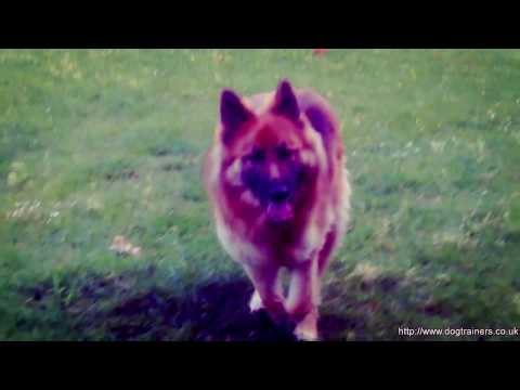 Xxx Mp4 XXX Dogs Whizzing 3gp Sex