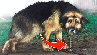 Chained up for 10 Years. See What Happened When It Was Released!