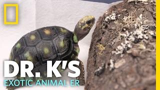 A Tortoise Spa Day | Dr. K's Exotic Animal ER
