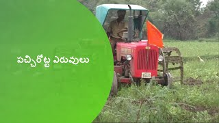 Green Manure practices in Paddy_DoAG&DigitalGreen_West Godavari,AP