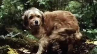 B3NJ1 THE HUNT3D 1987 Full Movie Family Drama Adventure Disney Movie