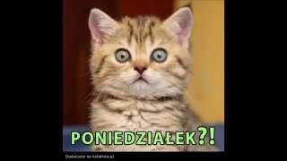 Śmieszne i słodkie kotki 2013/2014
