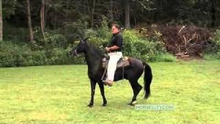 Calming Down a Hot Horse