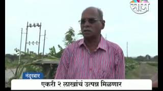 Ramesh Kamble's dragon fruit farming success story