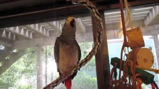 A Clean Parrot