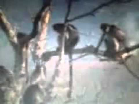 Xxx Mp4 Sex Monkey Punjabi Style YouTube Flv 3gp Sex