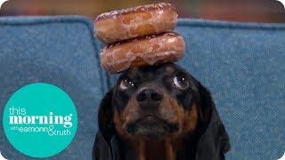 Meet Harlso the Balancing Hound | This Morning