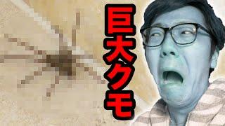 【閲覧注意】部屋に巨大クモが出現し大パニック!