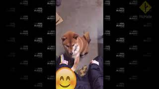 Joel vs Woman who plays cruel games with poor dog - MGTOW