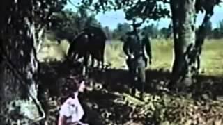 Jesse James' Women (1954) Westerns Full Movies English