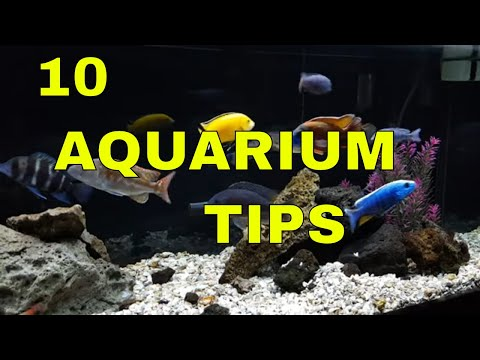 African Cichlids 10 Tips