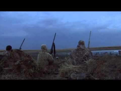Duck Hunting goose hunting chasse aux canard et aux oies