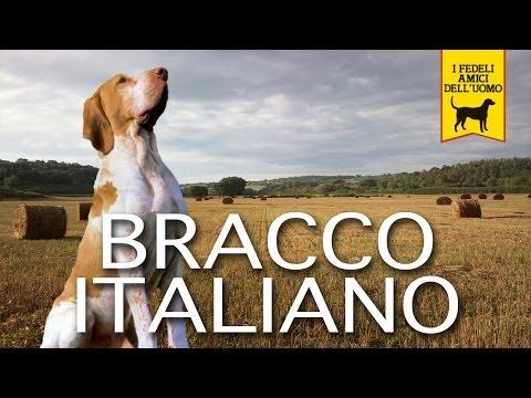 BRACCO ITALIANO trailer documentario