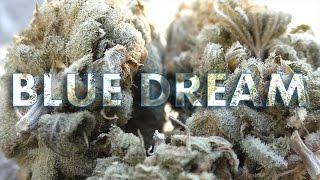 Marijuana Monday - Blue Dream Bud Review